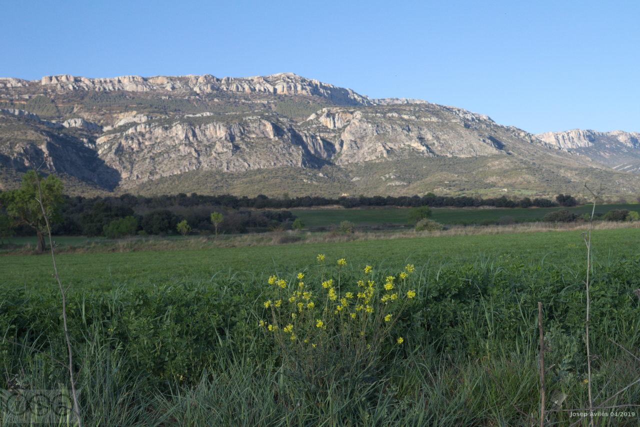La Serra del Montsec